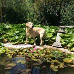 Jack e il giardino biologico